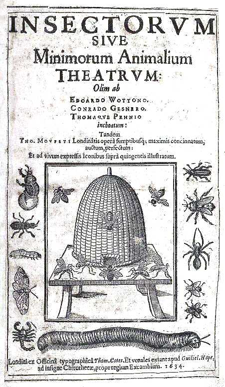 Animal - Insect - Bees - Medieval - Moffet theatrum Insectorum 1590