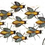 Animal - Insect - Bees - Medieval - Swarm