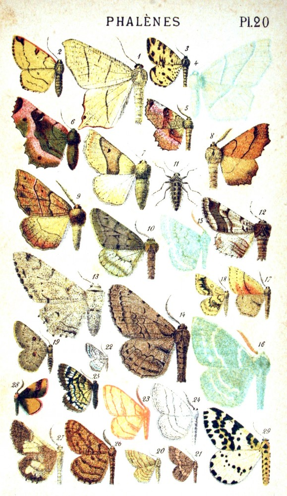 Animal - Insect -  Butterflies - Papillons 1884