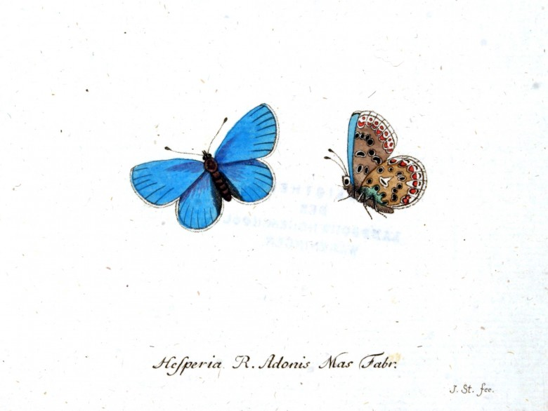 Animal - Insect - Butterfly - Blue - (2)