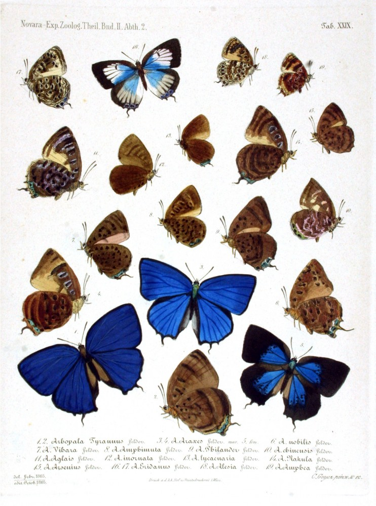 Animal - Insect - Butterfly - Blue - Collection 2