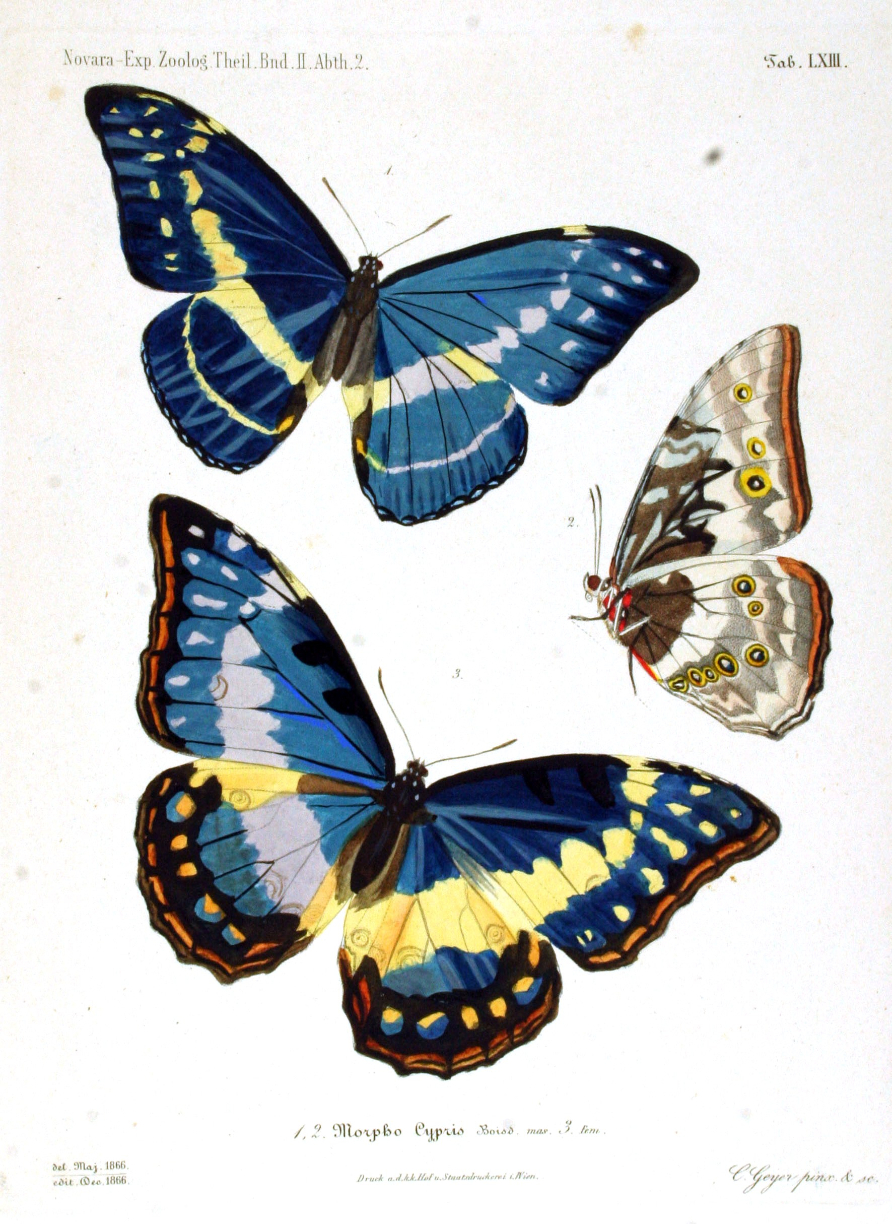 animal u2013 insect u2013 butterfly u2013 blue and yellow vintage printable