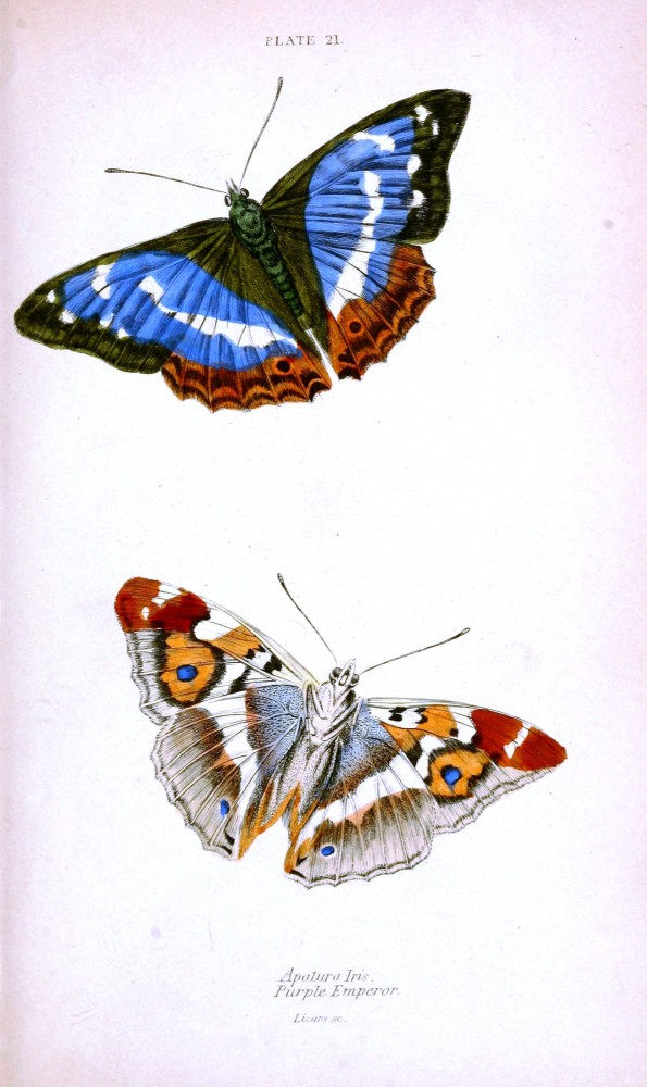 Animal - Insect - Butterfly - British Butterflies -  (10)