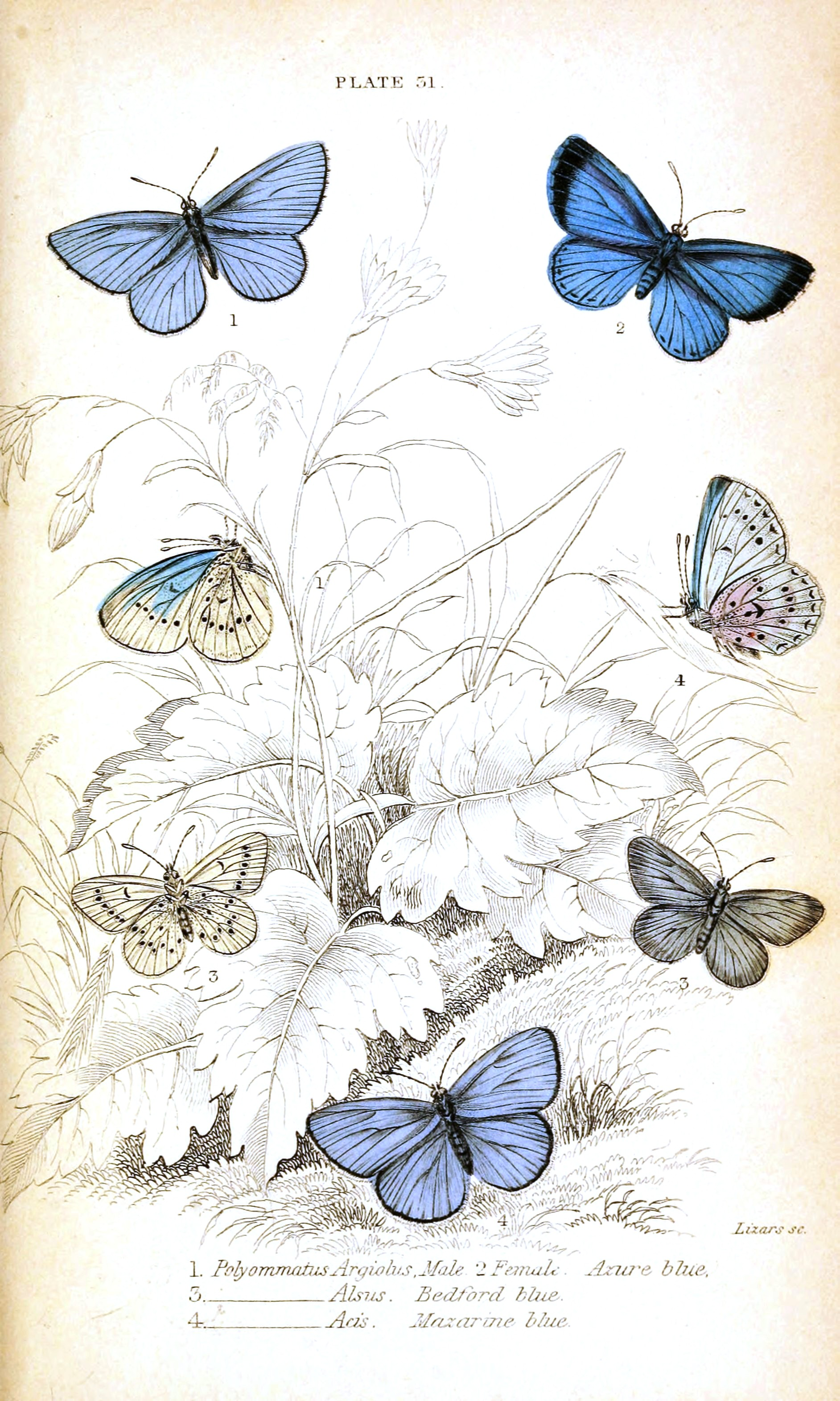 free vintage butterfly clipart - photo #33