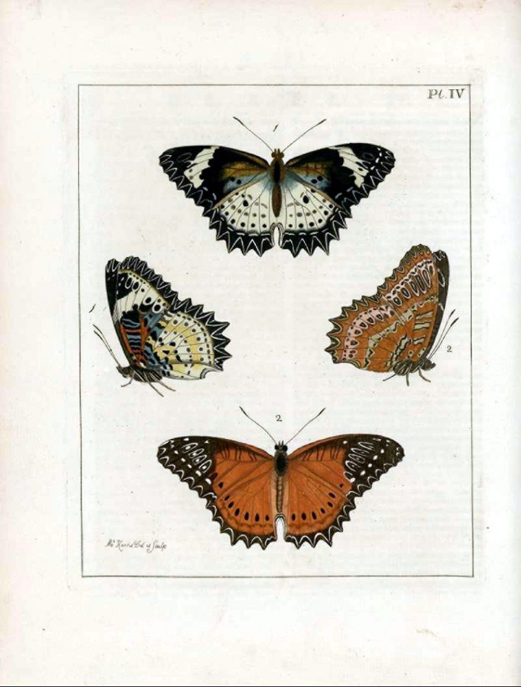 Animal - Insect - Butterfly - Collection - (1)