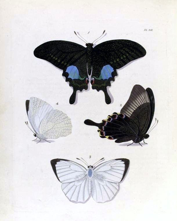 Animal - Insect - Butterfly - Collection - (10)