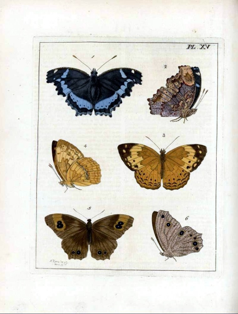 Animal - Insect - Butterfly - Collection - (14)