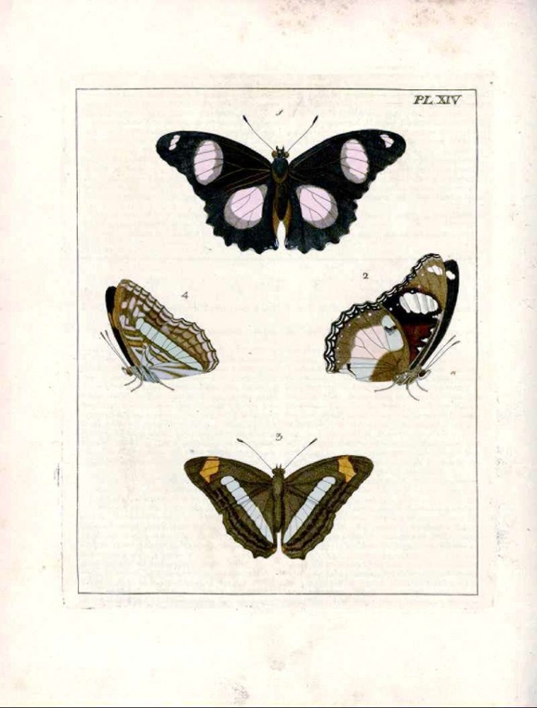 Animal - Insect - Butterfly - Collection - (4)