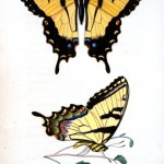 Animal - Insect - Butterfly - Monarch