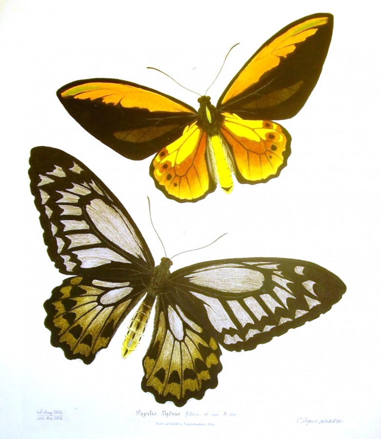 Animal - Insect - Butterfly - Orange