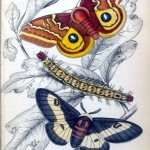 Animal - Insect - Butterfly - Specimen01 (1)
