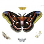 Animal - Insect - Butterfly - Specimen01 (11)