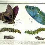 Animal - Insect - Butterfly - Specimen01 (12)