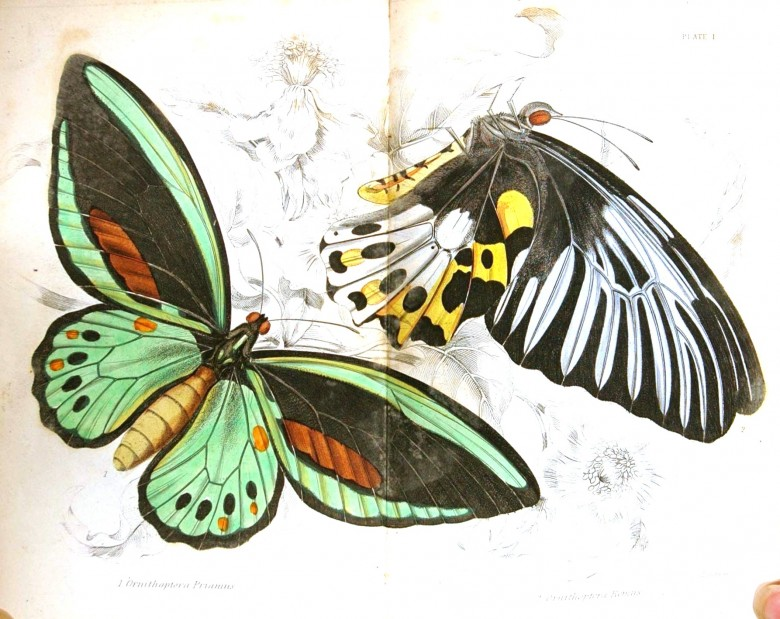 Animal - Insect - Butterfly - Specimen01 (13)