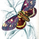 Animal - Insect - Butterfly - Specimen01 (4)