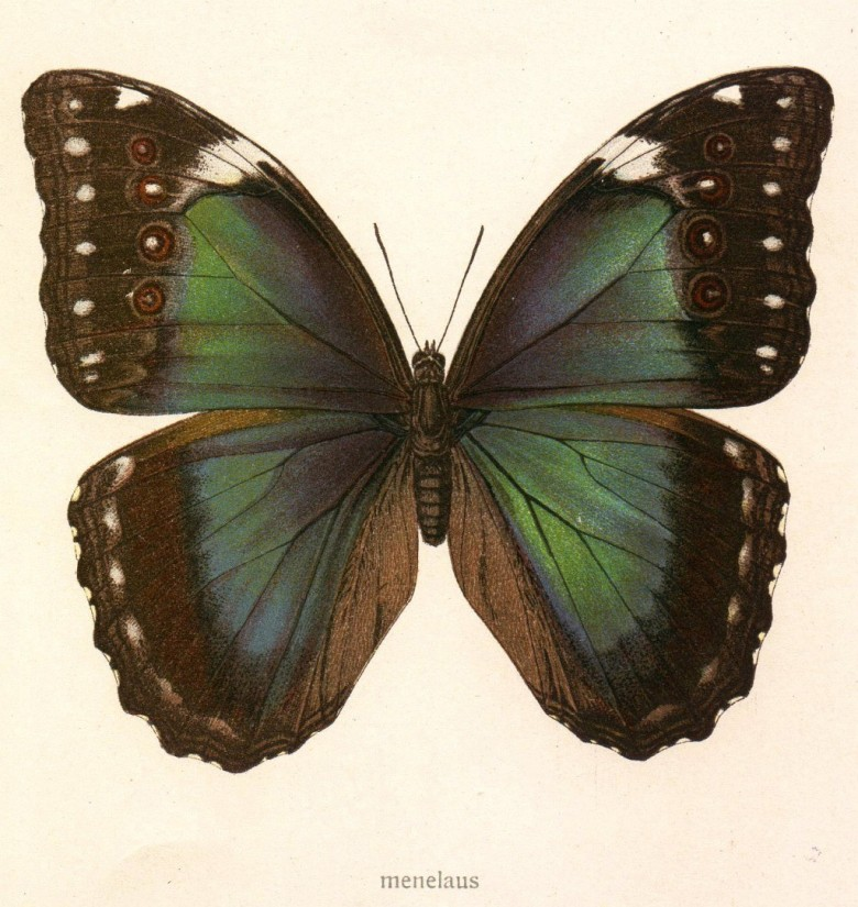 Animal - Insect - Butterfly - Specimen01 (7)