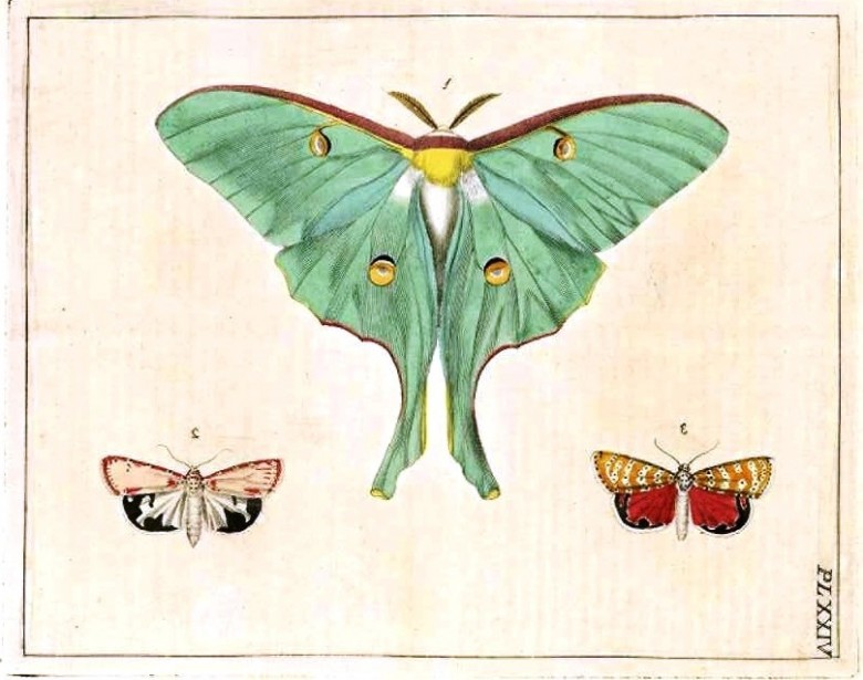 Animal - Insect - Butterfly - Turquoise