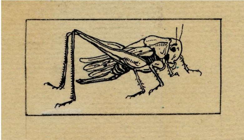 Animal - Insect - Grasshopper - Line drawing