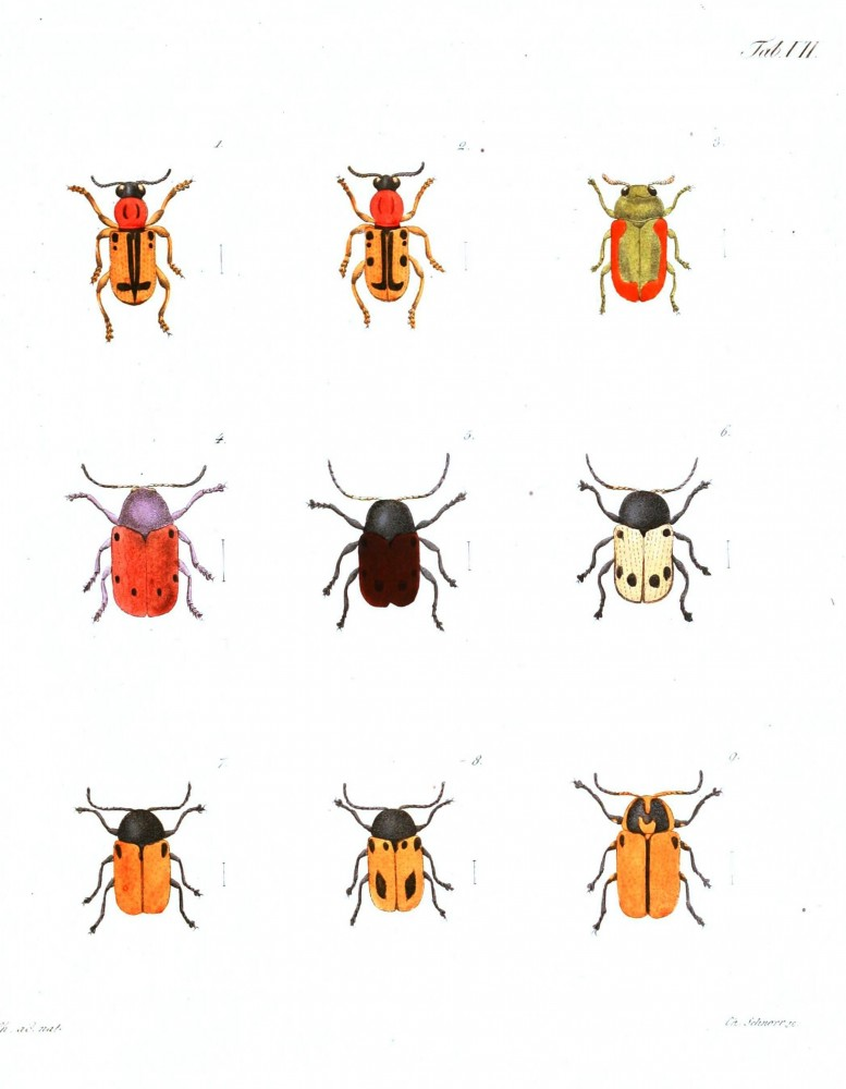 Animal - Insect - Orange bugs with spots