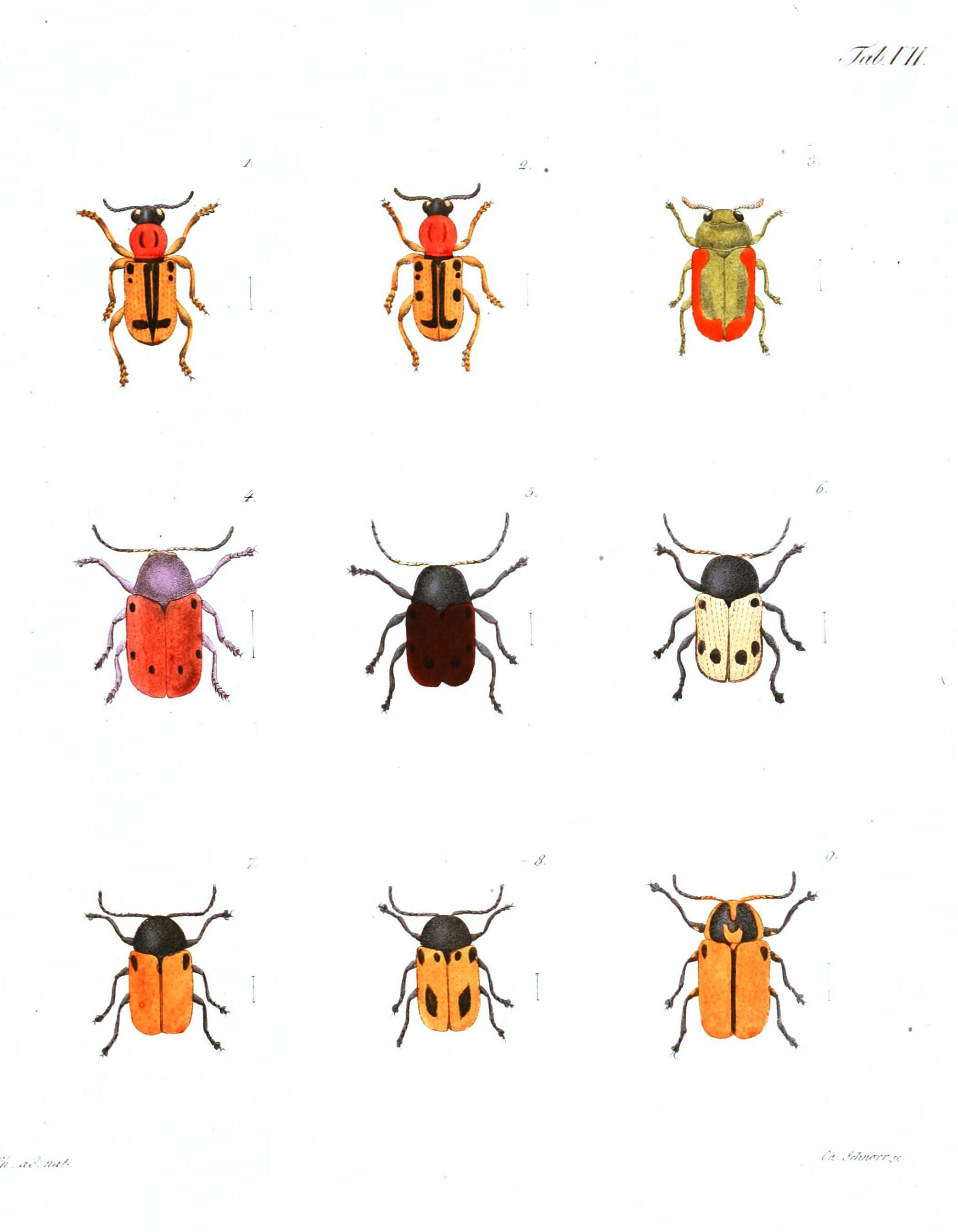 photograph relating to Printable Bugs referred to as Animal Insect Orange insects with locations Traditional Printable