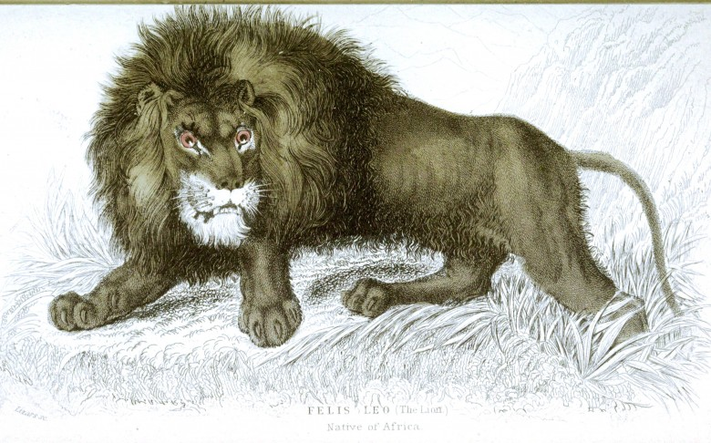 Animal - Jardine - Lion