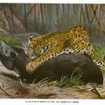 Animal - Leopard and Tapir - Scene