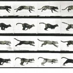 Animal - Locomotion - Photo - Cat - Running - Stop motion