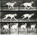 Animal - Locomotion - Photo - Dog - Running- stop motion