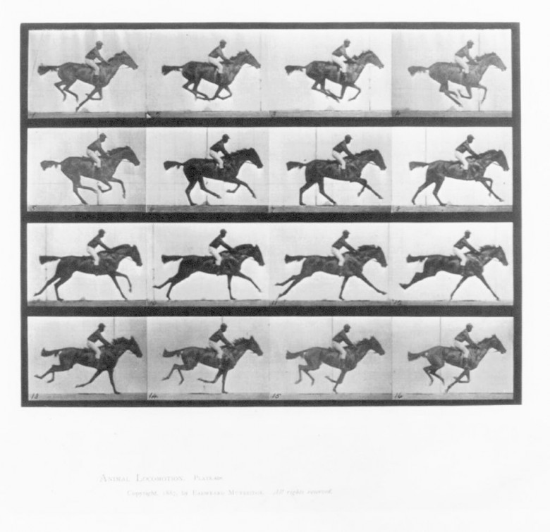 Animal - Locomotion - Photo - Horse - Racehorce