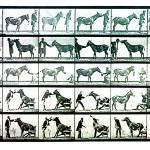 Animal - Locomotion - Photo - Man and Mule