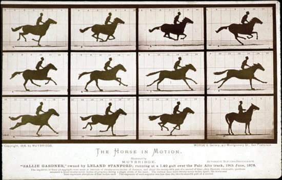 Animal - Locomotion - Photo - Range and farm - Horse