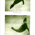 Animal - Locomotion - Seal