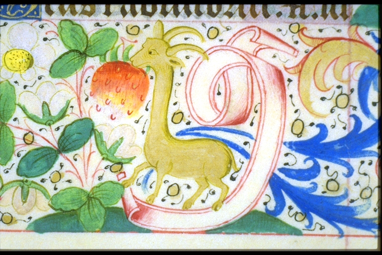 Animal - Medieval - Giraffe