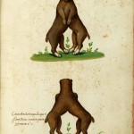 Animal - Monster - Italian (1) - Dog conjoined