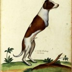 Animal - Monster - Italian (10) - Dog missing upper limbs