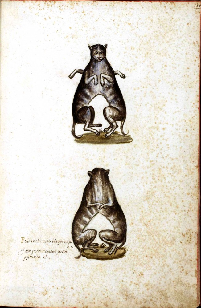 Animal - Monster - Italian (2) - Cat conjoined