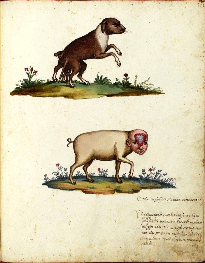 Animal - Monster - Italian (24) - Dog with extra legs; pig with boy face with brain showing