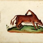 Animal - Monster - Italian (32) - Cow with extra hind limbs and adventitious hoof
