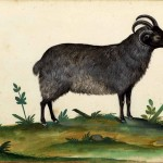 Animal - Monster - Italian (33) - Three horned goat
