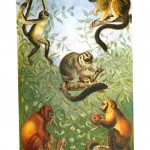 Animal - Non-human primate - Monkeys - Educational Plate