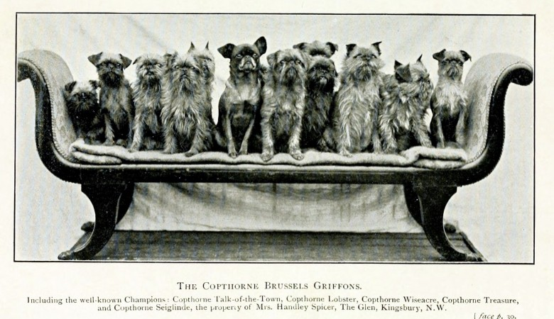 Animal - Photo - Dog - Dogs on a couch
