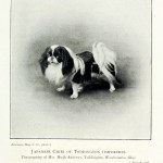 Animal - Photo - Dog - Japanese Chibi