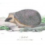 Animal - Prickly - Illuminerade Figurer - Woodland - Hedgehog Igelcott
