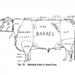 Animal - Range and Farm - Cow - Diagram for butchering  (1)
