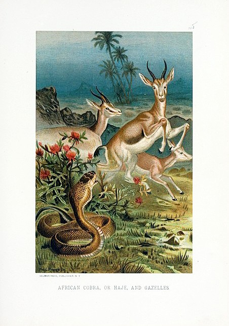 Animal - Range and Farm - Gazelle and snake