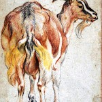Animal - Range and Farm - Goat - Pastel sketch