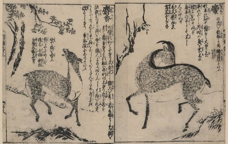 Animal - Range and Farm - Goats - Asian - Black and white woodblock