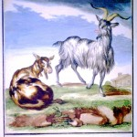Animal - Range and Farm - Goats - French