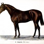 Animal - Range and Farm - Horse -  Anglais