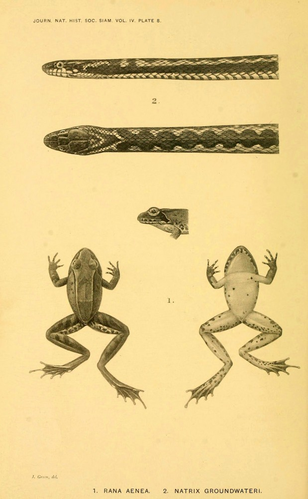 Animal - Reptile - Frogs and snakes